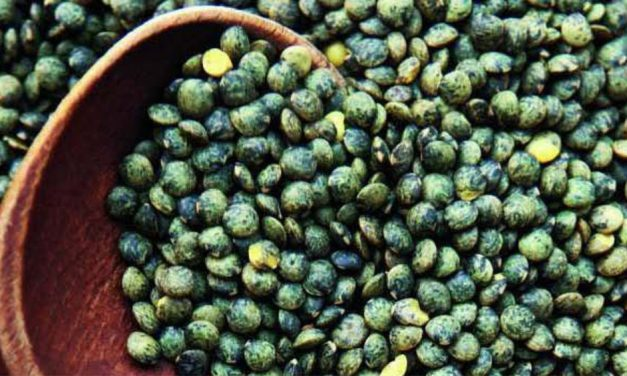 """Le Puy green lentils, so rich 'caviar of the poor'."""